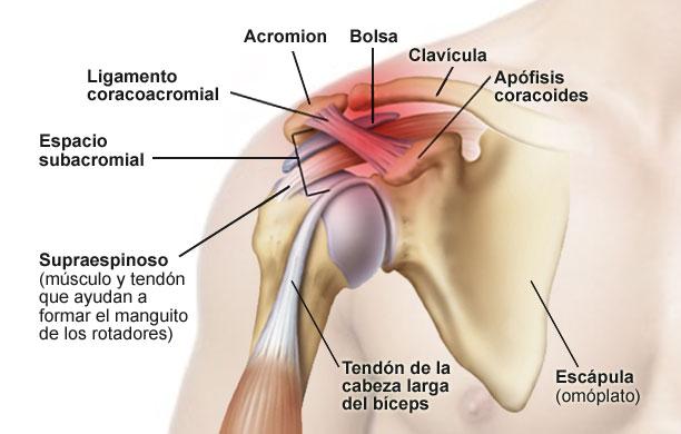 ¿Por qué me duele el hombro? Conoce sus posibles causas..