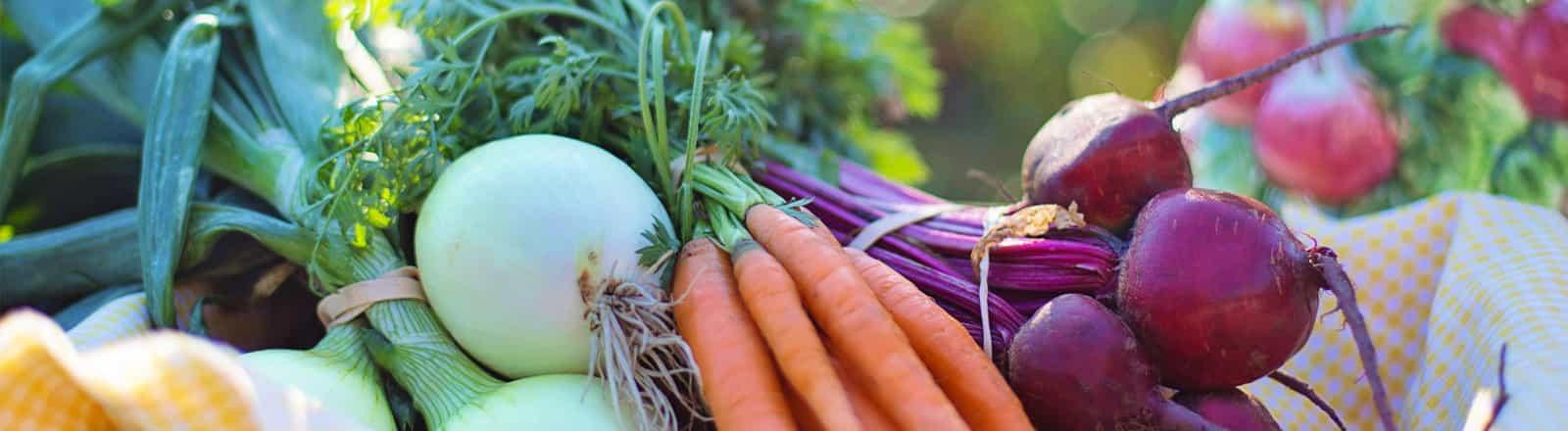 nutrición y visión integral Palma